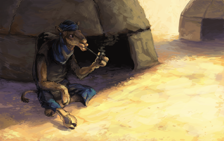 portfolio_Tuareg
